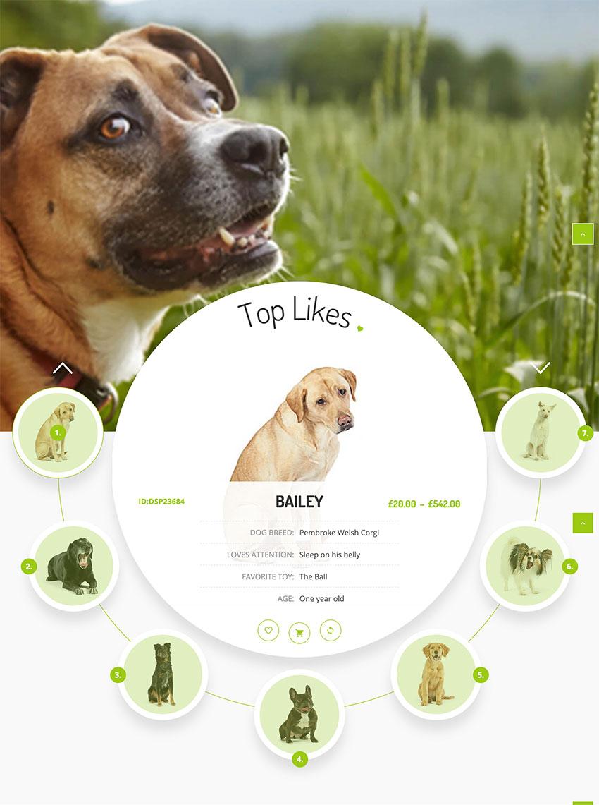Best Animal & Pet Care WordPress Themes 2020 (Free & Premium)